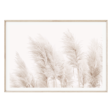 Coastal Pampas Grass by Boho Art & Styling, a Prints for sale on Style Sourcebook