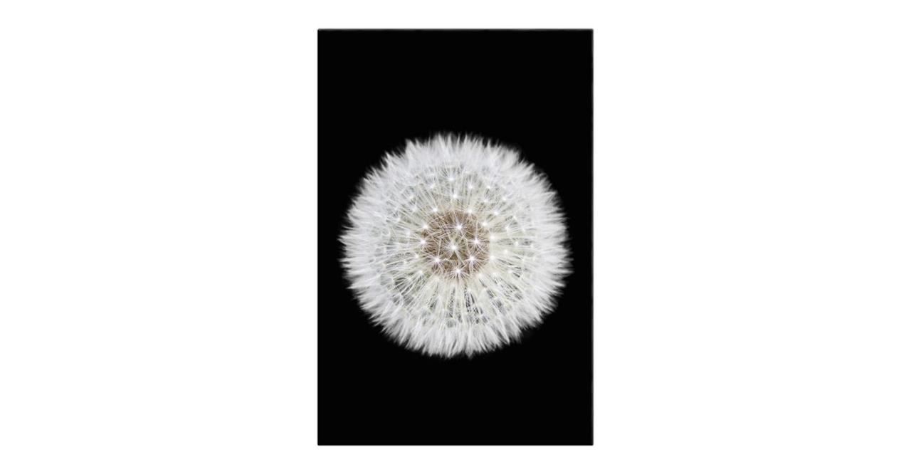 The Dandelion Print Canvas Medium One