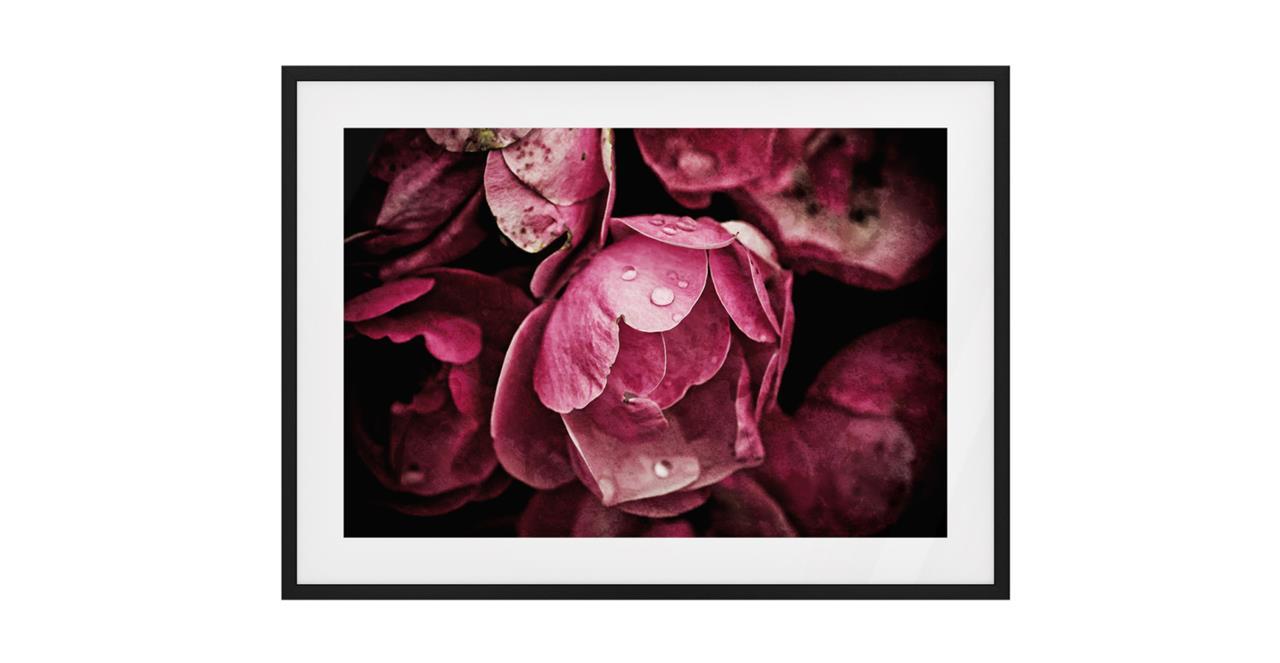 The Dew Drop Print Black Wood Frame Medium