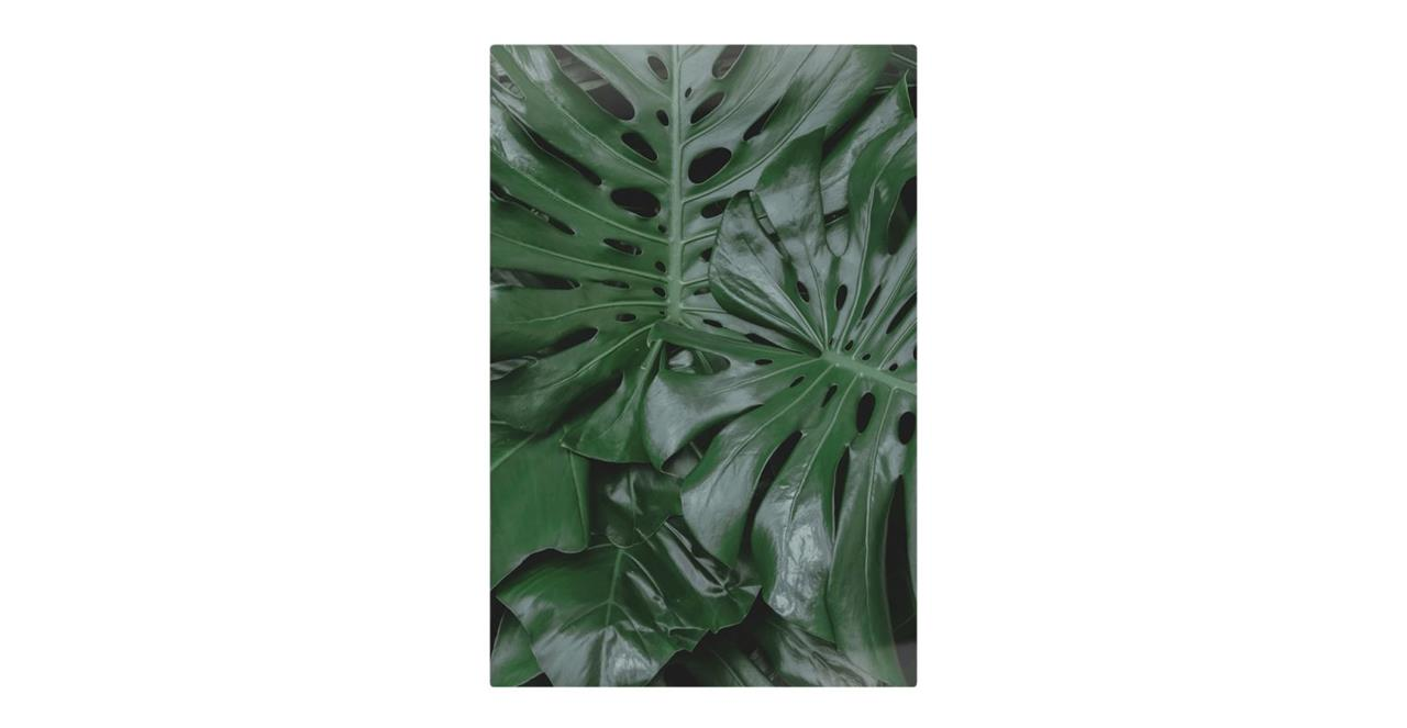 The Philodendron Print Metal Print Medium