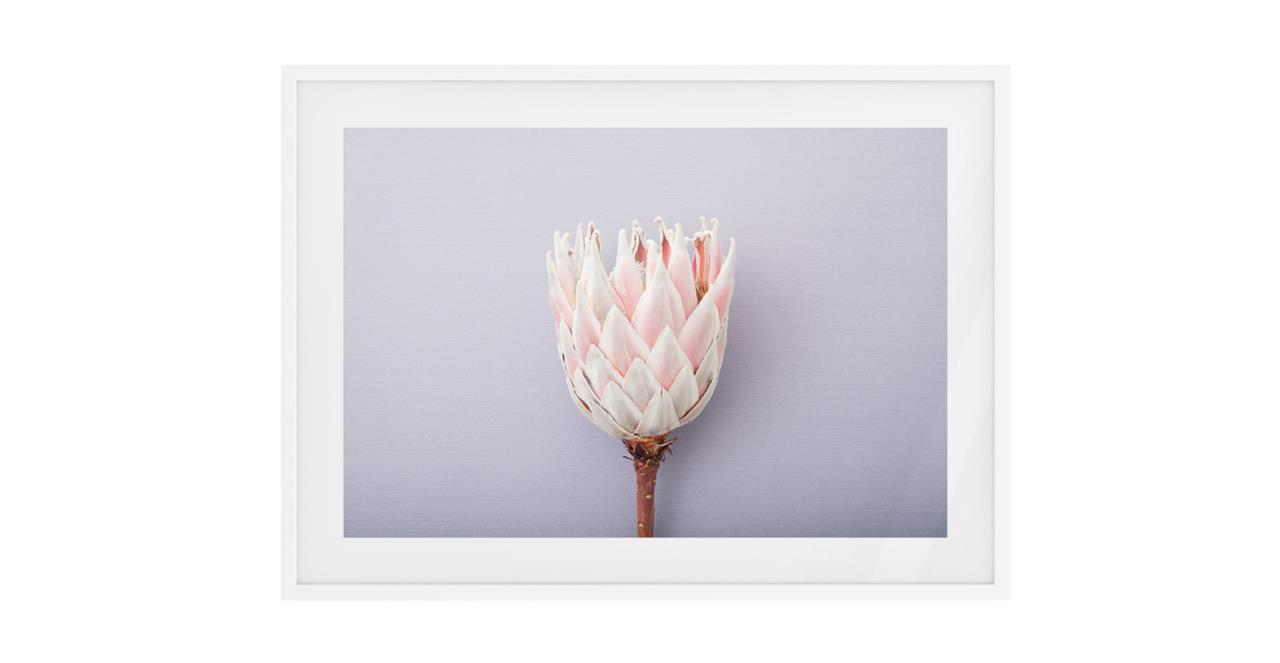 The Protea Print White Wood Frame Small