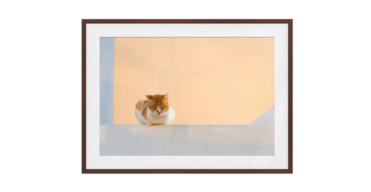 The Feline Print Dark Brown Wood Frame Small
