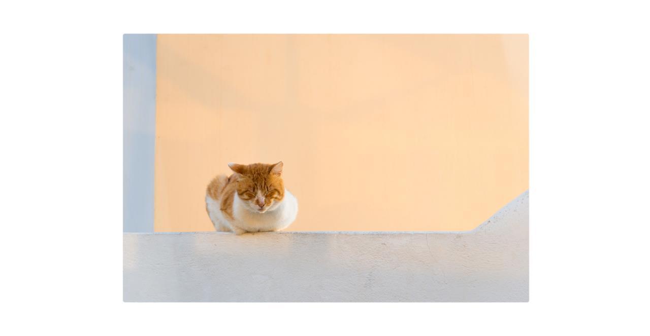 The Feline Print Metal Print Small