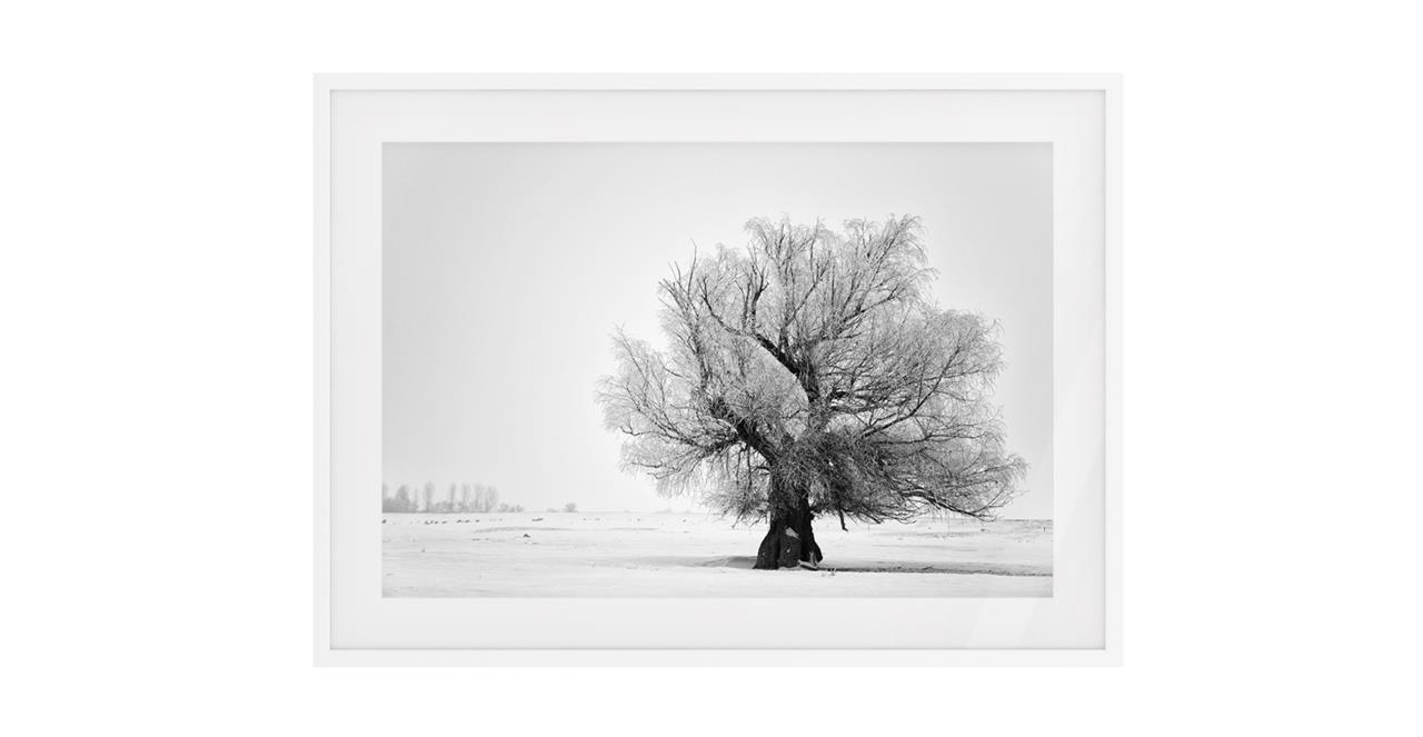 The Frost Print White Wood Frame Small