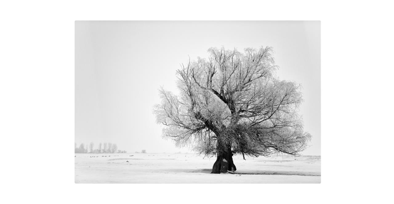 The Frost Print Metal Print Small