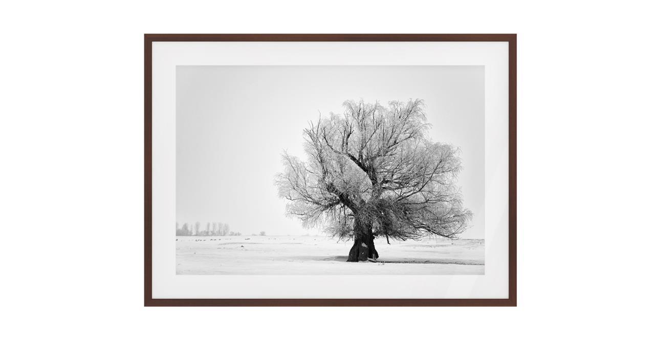 The Frost Print Dark Brown Wood Frame Medium