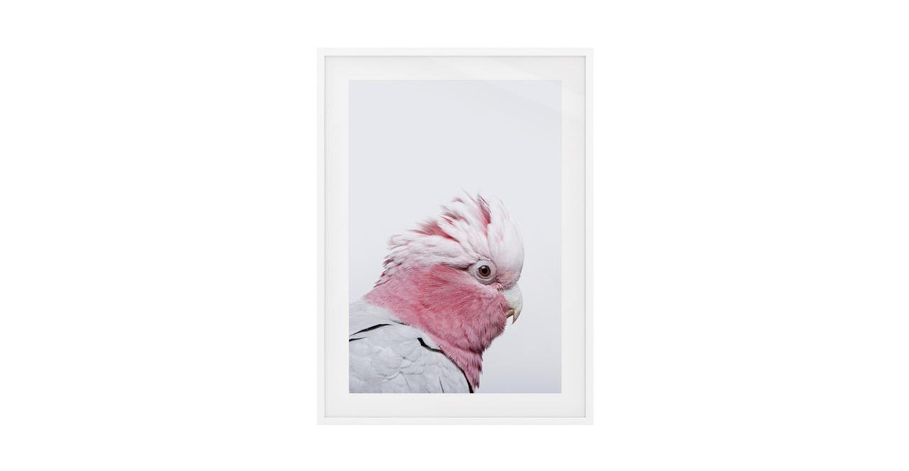 The Galah Print White Wood Frame Medium