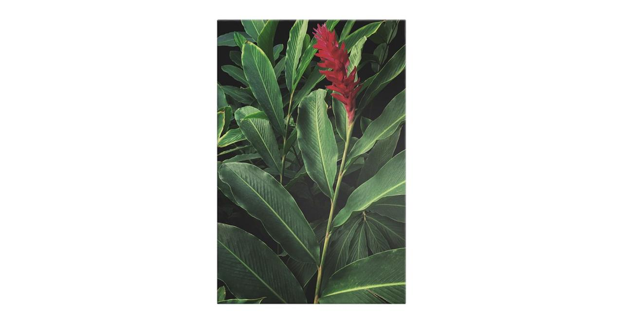 The Red Ginger Print Canvas Small